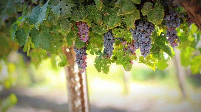 immobilier dans la vigne